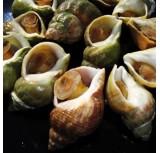 Cargol Mar cuits